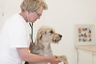 Praktikum beim Tierarzt